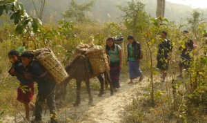 Locals transporting oranges
