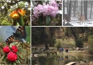 Bhutan Rhododendron Festival 2013