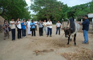 From Bhutan to Kangayam to learn about a cattle breed
