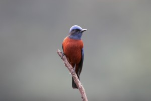 Birdwatching in Bhutan