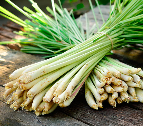 Lemongrass stalks
