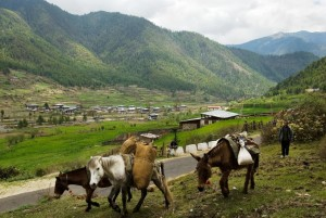 Yangthang Village in Haa Valley