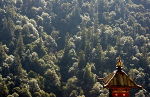 Bhutan's constitution mandates maintaining 60% forest cover for all times to come.